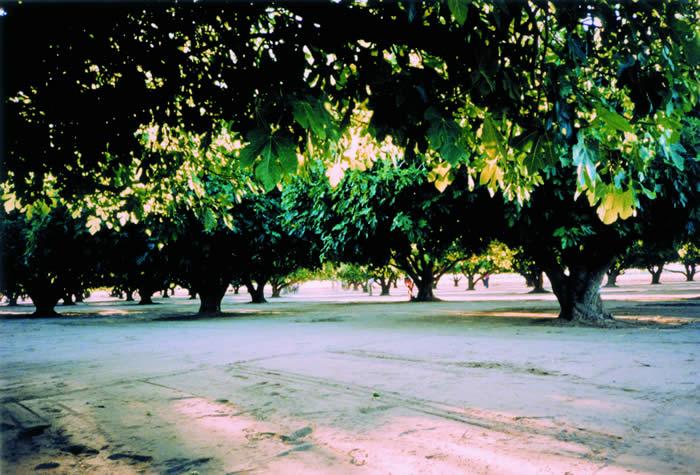 OrchardShot