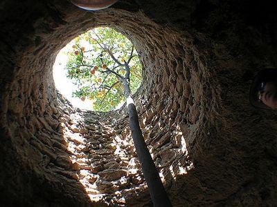 Underground Gardens FruiteTree